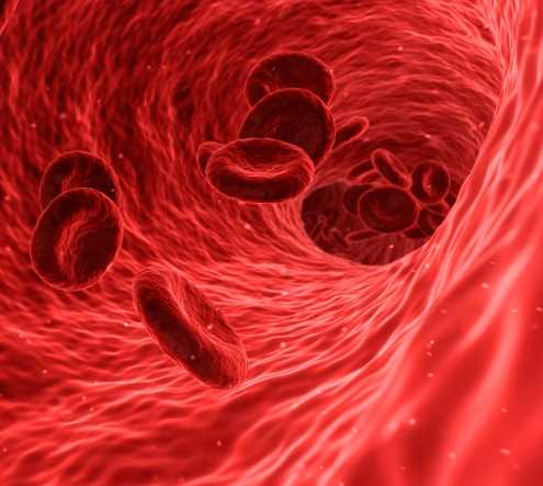 How stress controls hemoglobin levels in blood