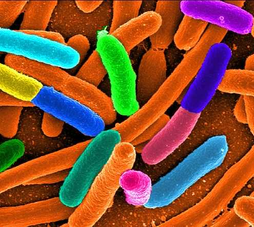 Bacteria Sleep, Then Rapidly Evolve, to Survive Antibiotic Treatments