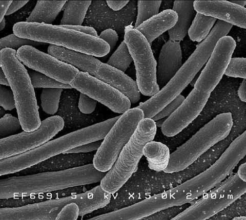 A First: Scientists Show That Bacteria Can Evolve a Biological Timer to Survive Antibiotic Treatments