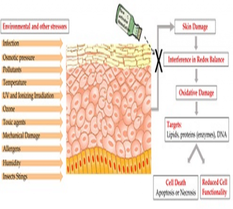 Nanotechnology delivery system offers new approach to skin disease therapies