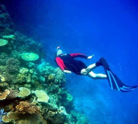 Ocean Acidification Could Lead to Collapse of Coral Reefs, Say Hebrew University Scientists