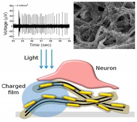 Wireless nanorod-nanotube film enables light stimulation of blind retina; breakthrough could lead to artificial retinas for visually impaired
